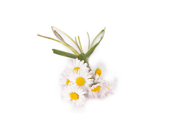 bouquet of daisies isolated