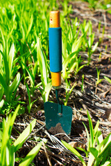 Gardening tools on the ground in backyard