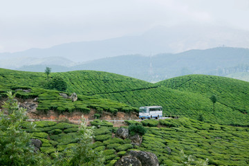 A Bus Passing through the Tea Plantation in Munnar,Kerala,India