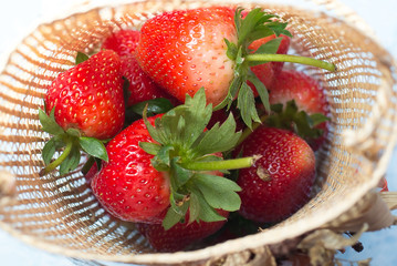 strawberries in a basket in the garden