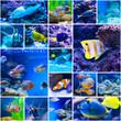 Colorful fish in aquarium saltwater world - 81182275