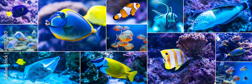 Colorful fish in aquarium saltwater world - 81182280