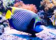 Leinwanddruck Bild - Colorful fish in aquarium