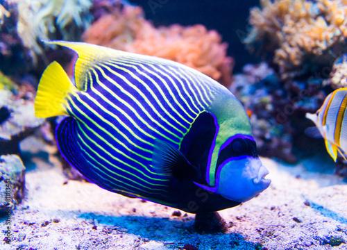 Leinwanddruck Bild Colorful fish in aquarium