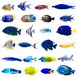 canvas print picture - Tropical fish set