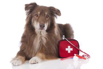 Australian Shepherd Hund mit Erste Hilfe Set