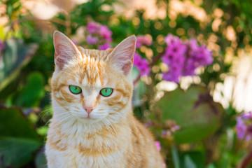Gatto rcon occhi verdi tra i fiori