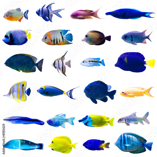 Foto op Canvas Onder water Tropical fish set