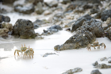 crab on the sand at sunset
