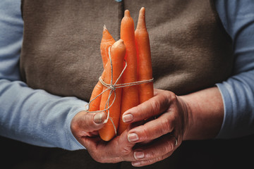 fresh carrots in hand