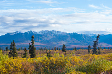 view from road alaska