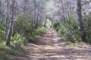Camino rural.