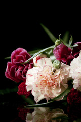 carnation on a dark background