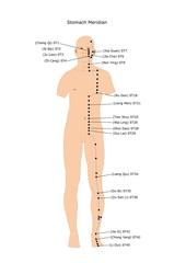 agopuntura: meridiano dello stomaco e suoi punti