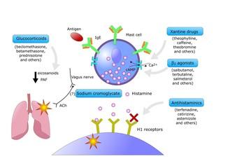 allergia: principali farmaci per curarla