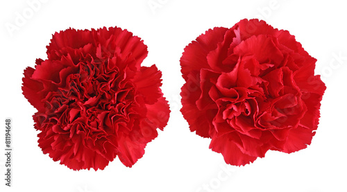 Red Carnation flowers - 81194648