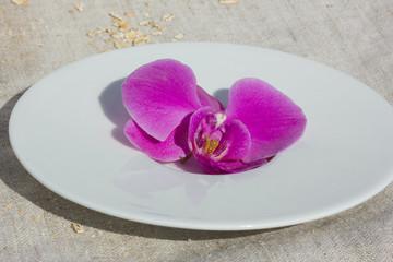 орхидея на тарелке