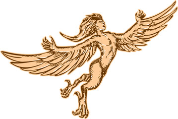 Harpy Flying Front Etching