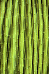 Green bamboo. Picture can be used as a background