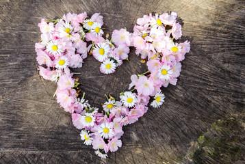 Liebe: Herz aus Japanischen Kirschblüten und Gänseblümchen :)
