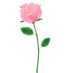 バラ ピンク アイコン