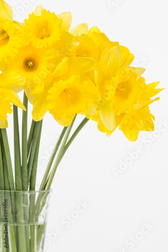 Plexiglas Narcis Bright yellow spring daffodils arranged in vase