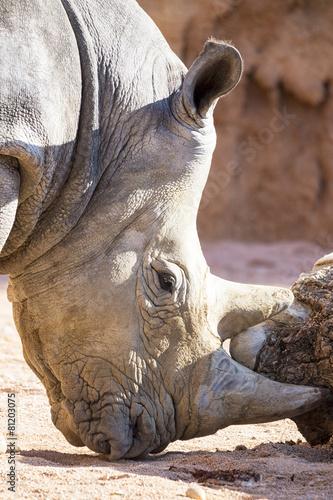 Tuinposter Neushoorn Rinoceronte