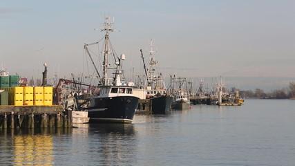 Steveston Harbor, Fishboat Unloading Herring