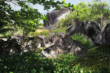 Beautiful black granite rocks in the thickets of tropical