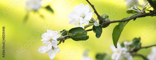 Frühling Panorama