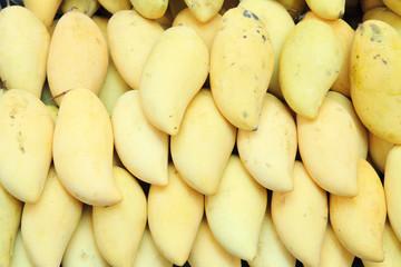 yellow mango