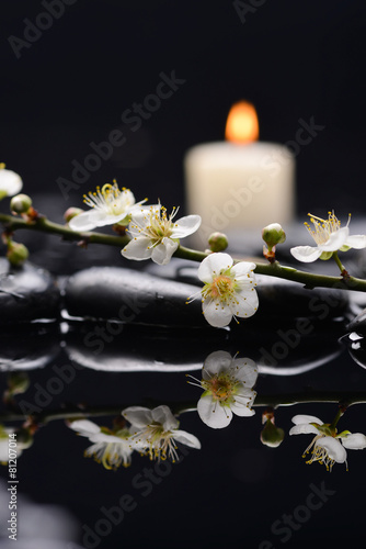 Poster Spa cherry blossom with white candle on black stones