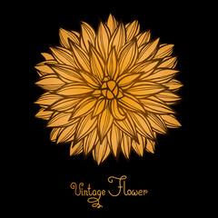 Bright Dahlia Flower Isolated for design.