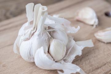 Broken old bulbs of garlic