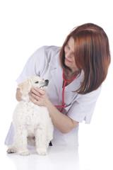 Tierärztin untersucht Pudel