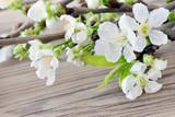 Kirschblüten - 81208686