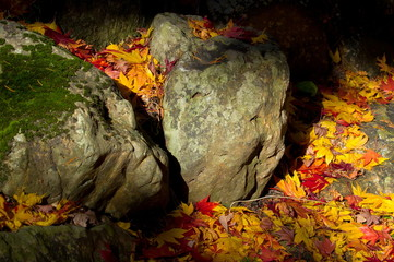 autumn stones
