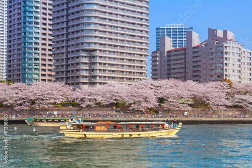 Deurstickers Kersen 桜並木と屋形船
