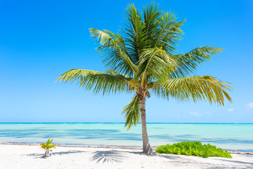 Palm tree on exotic tropical beach