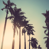 coconut palm tree sunset vintage retro