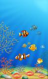 Fototapeta Do akwarium - Rafa koralowa © olgra