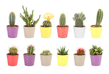 Cactus, aloe and other succulents isolated on white background