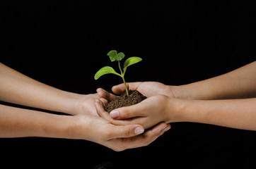 female hands holding sapling