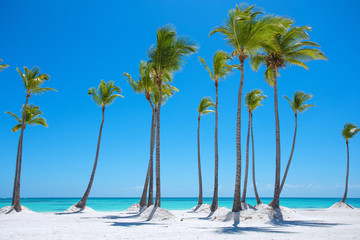 Tropical paradise beach with palm trees
