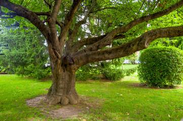Baum mit starken Ästen