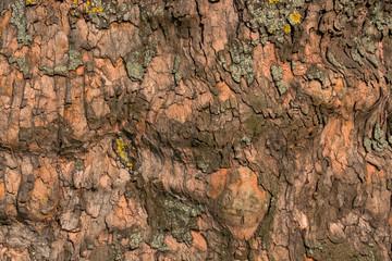 Borke eines alten Baumes