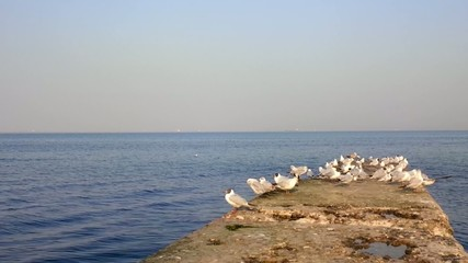 Black Sea, flock of seagulls are resting on the pier