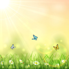 Nature background with butterflies