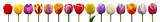 Wunderschöne Tulpen - 81217804