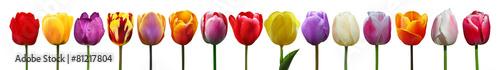 Poster Tulp Wunderschöne Tulpen